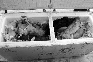 苏州常熟一团伙毒镖毒狗 60多条狗被害躺冰柜