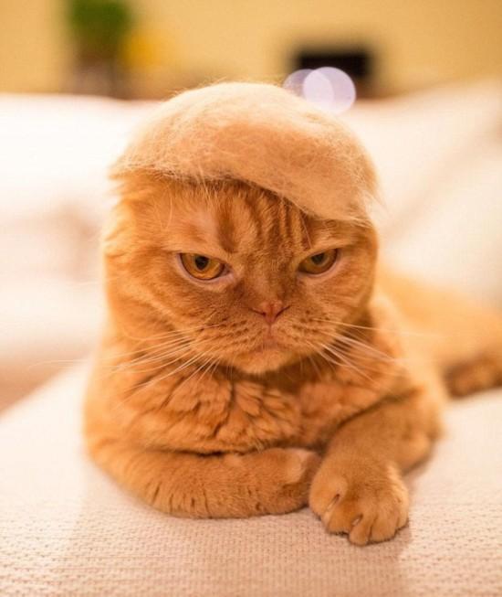 这些照片被传至网络后迅速走红,吸引了不少猫咪真爱粉.