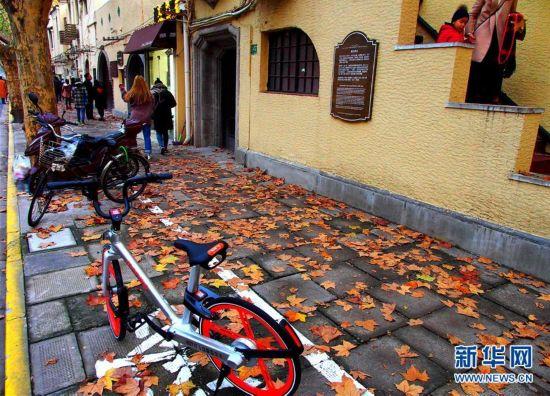 上海:落叶景观道 城市自然美