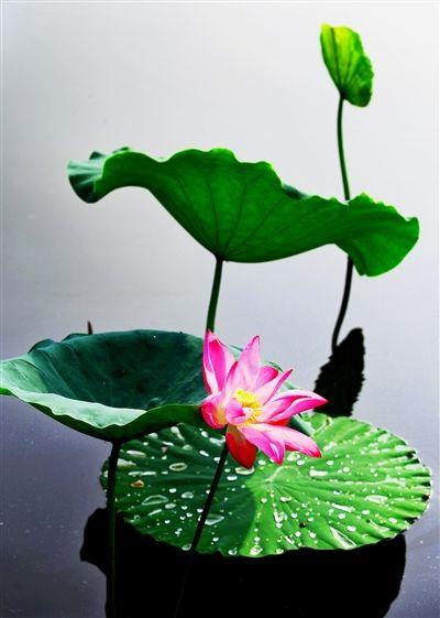 中国好风光--七仙女传说之乡·新余(十二)