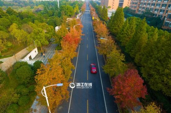 """杭州这条特色大道""""枫""""景独好(组图)"""
