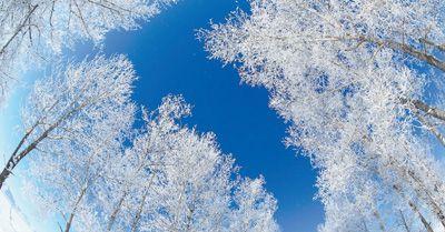 白雪变白银猫冬成忙冬 冰雪旅游领跑冰雪经济