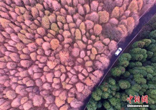 航拍重庆喀斯特国家生态公园 茂盛森林五彩缤纷(组图)