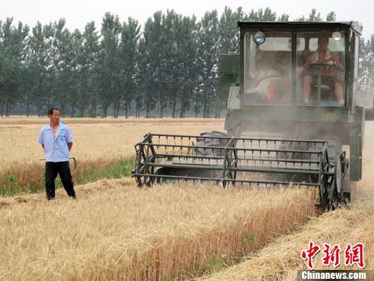 多个粮食主产区量减价跌