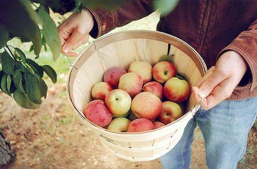 """苹果吃不对等于""""自杀"""" 最好细嚼十五分钟"""