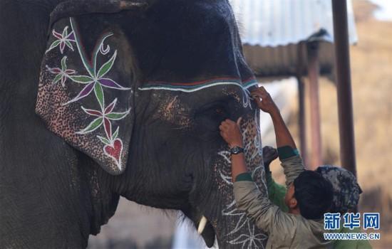 尼泊尔大象节