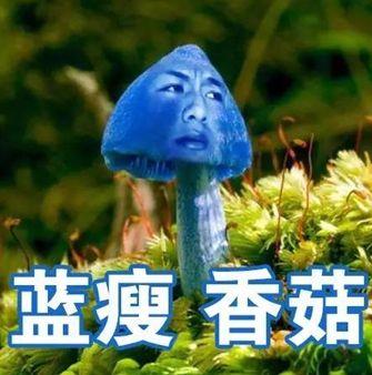 2016,李大师的表情包--人民网海南频道