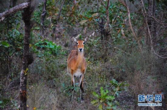 (国际)(10)探访加纳莫雷国家公园