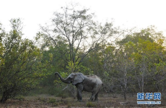 (国际)(4)探访加纳莫雷国家公园