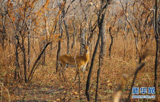 (国际)(3)探访加纳莫雷国家公园