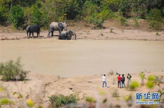 (国际)(1)探访加纳莫雷国家公园