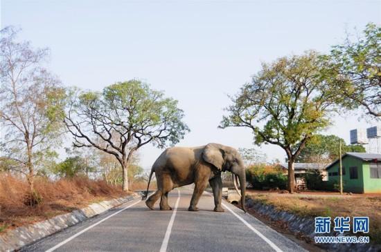 (国际)(2)探访加纳莫雷国家公园