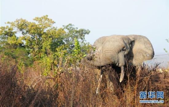 (国际)(6)探访加纳莫雷国家公园