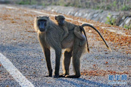 (国际)(5)探访加纳莫雷国家公园