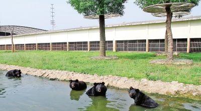 雄森野生动物园熊观赏区.(杨光华摄)