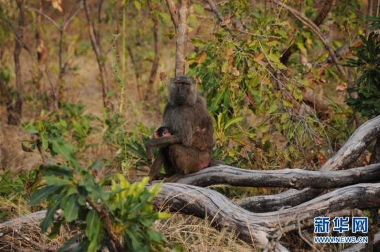 (国际)(8)探访加纳莫雷国家公园