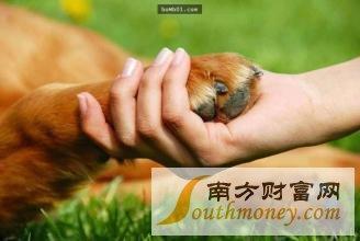 宠物离世可休丧假 使员工有足够时间抚平内心的伤痛