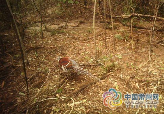 常州溧阳发现珍稀濒危物种 在江苏尚属首次