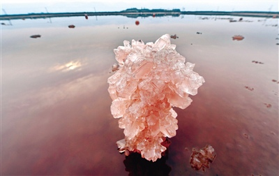中国死海变玫瑰湖