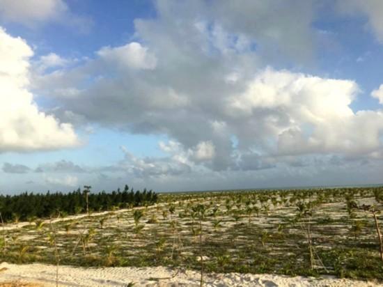 西沙洲植树绿化及配套工程通过验收