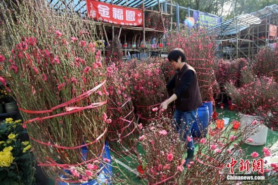 香港年宵花市热闹腾腾 营造节庆气氛