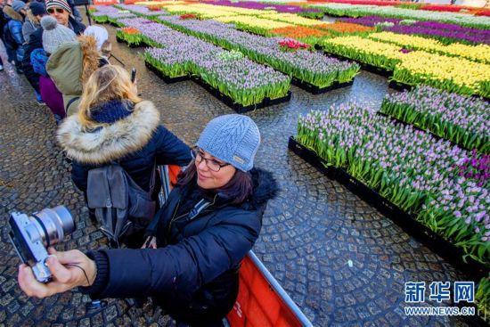 荷兰庆祝郁金香日