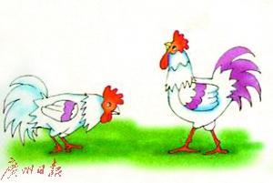 鸡年说鸡 故事不少