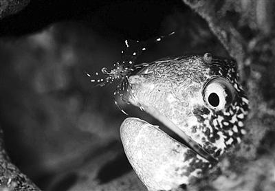 微距拍海洋生物妙趣横生一面