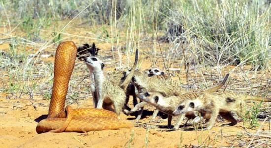 看摄影师如何近距离拍摄野生动物