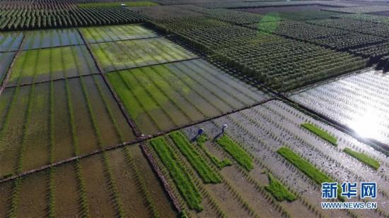 海南三亚:新春农忙