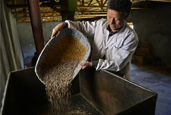 2月6日,三安曲林乡贫困户在隆子县紫尚品黑青稞糌粑加工厂房内炒制黑青稞。