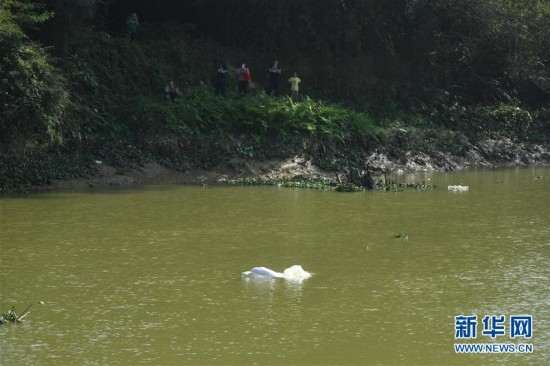 广东一高龄中华白海豚误入内河
