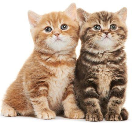 女大学生把猫藏肚子扮孕妇乘火车 安检时猫叫
