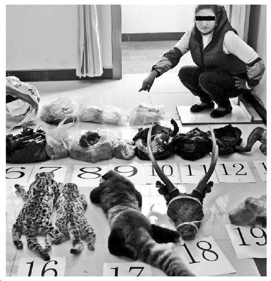 鸟类,猴类骨头及肉制品15件(待鉴定),国家三有保护动物豹猫,麂子等