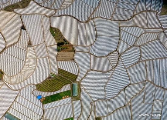 Aerial photos of fields covered by plastic films in Guangxi