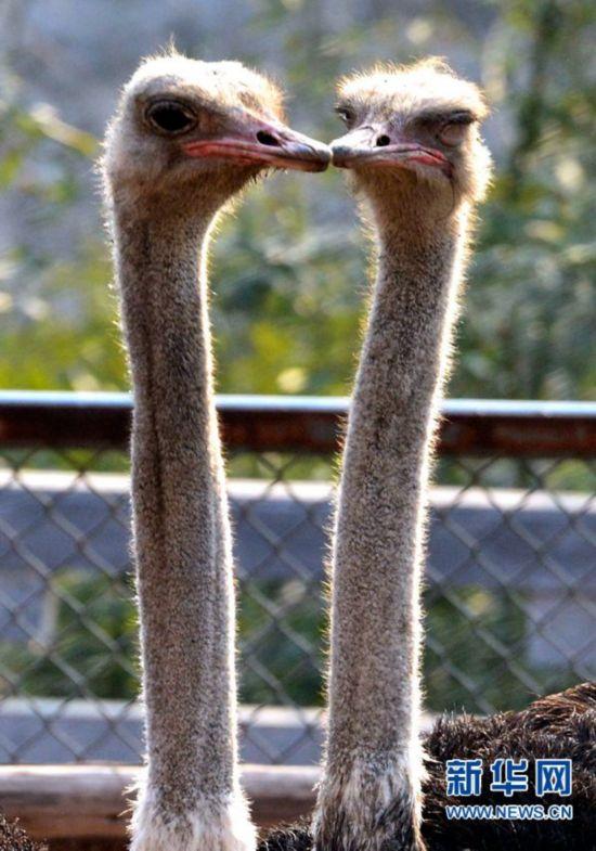 情人节,在洛阳王城公园动物园,动物们也来凑热闹,用不同形式秀