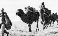 为八路军运送物资的骆驼队