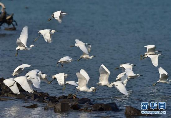 罗源湾内鸟类多(组图)