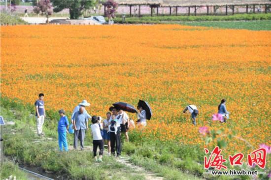 一起看花海!三亚海棠湾700余亩鲜花争艳绽放