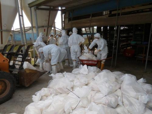 台南下营一处蛋鸡场,检验出H5N2,动保处人员扑杀7782只蛋鸡。来源:台湾《联合报》(台南市农业局动保处提供)