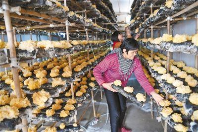 山東省惠民縣全年實施各類扶貧產業項目203個