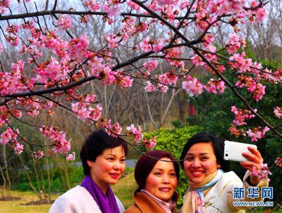 上海:缤纷早樱已盛开