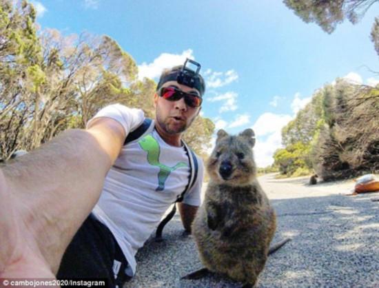 求抱抱!澳短尾矮袋鼠跳向观光者相机前甜笑摆姿势