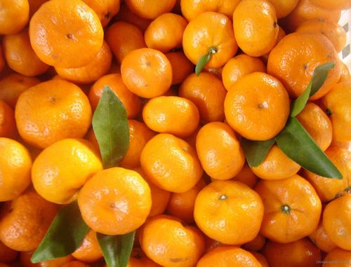 一个橘子5味药 每天一个桔子最防三癌