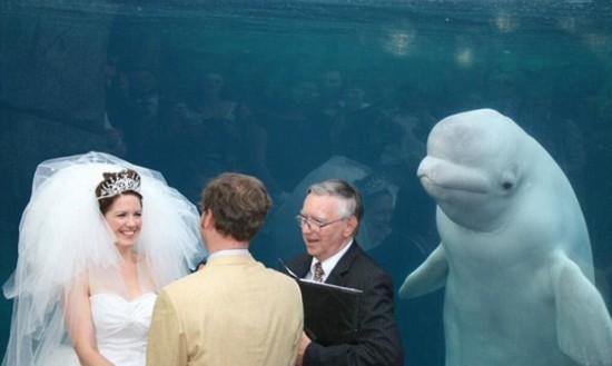 据英国《每日邮报》2月26日报道,近日,美国一对新人在康涅狄格州神秘海港水族馆(Mystic Seaport in Mystic)举行婚礼时,一头白鲸突然现身其背后,面带笑容,十分抢镜。
