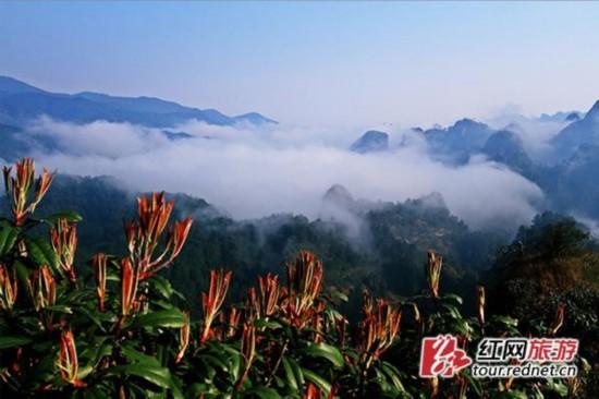 �~山景区现壮观云海 云雾缭绕如同仙境