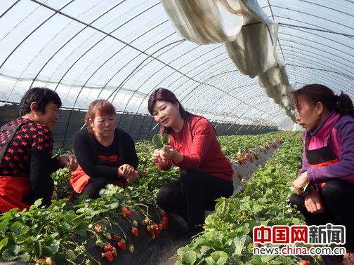 河南省洛陽市孟津縣京孟種植專業合作社理事長呂妙霞
