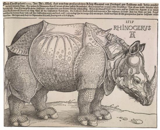 丢勒的《犀牛》.jpg