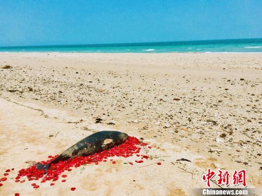 广西北海涠洲岛海豚死亡情况频发民众组织护鱼队