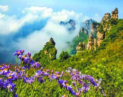 阳春三月花开成海 未来3个月河北最美赏花处